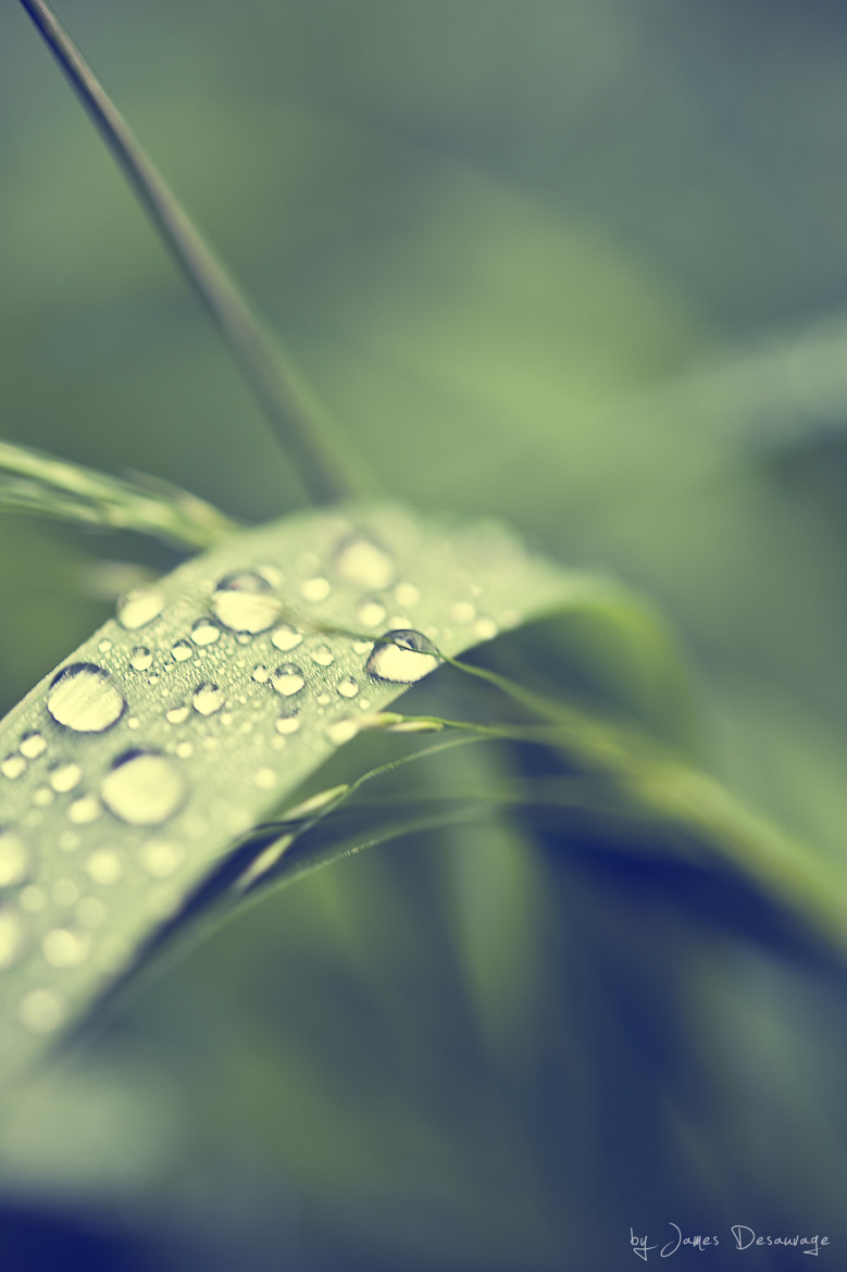 Photograph Droplets by James Desauvage on 500px