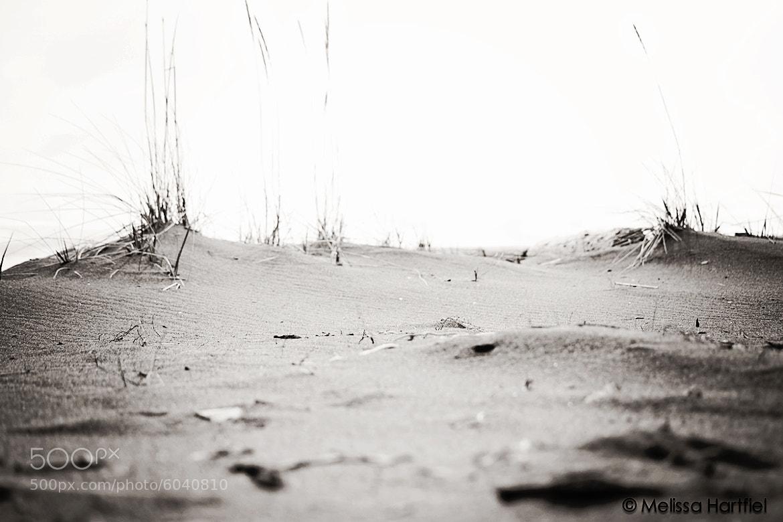 Photograph Sand Dunes by Melissa Hartfiel on 500px