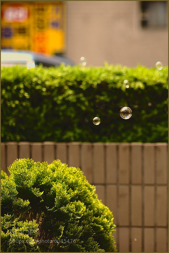 Photograph Bubble Fly by Kim Hee Wan on 500px