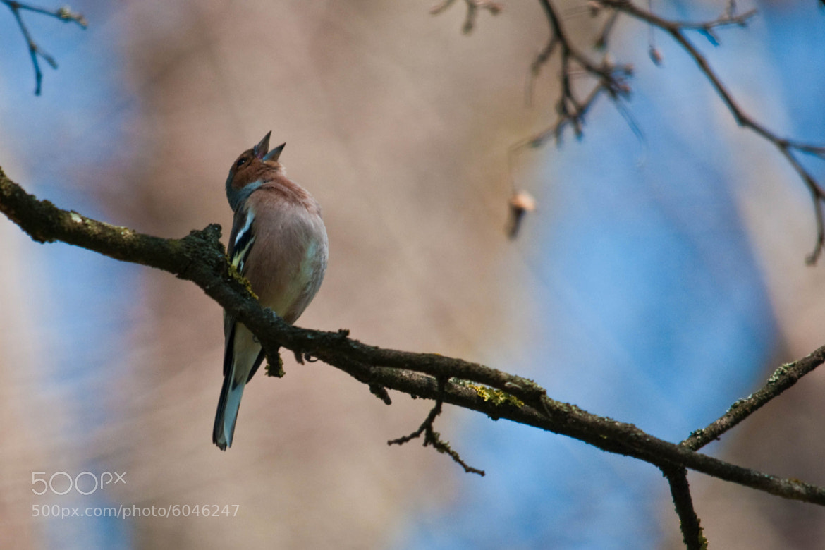 Photograph singer (01) by Vlado Ferencic on 500px