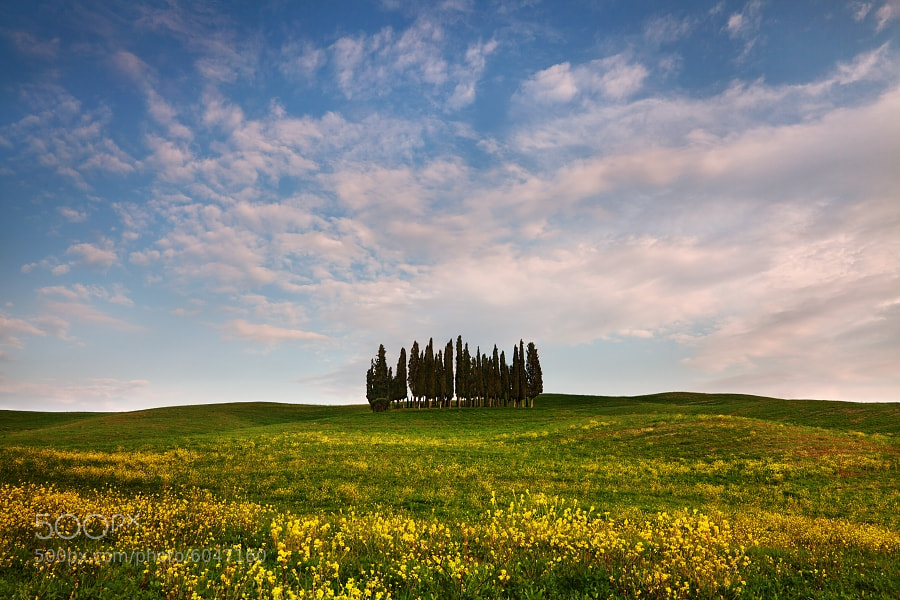 Photograph Tuscany Grove by Daniel Řeřicha on 500px