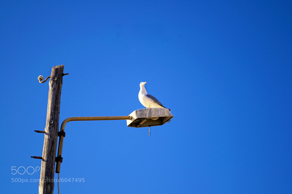 Photograph Seagull on light by James Cull on 500px