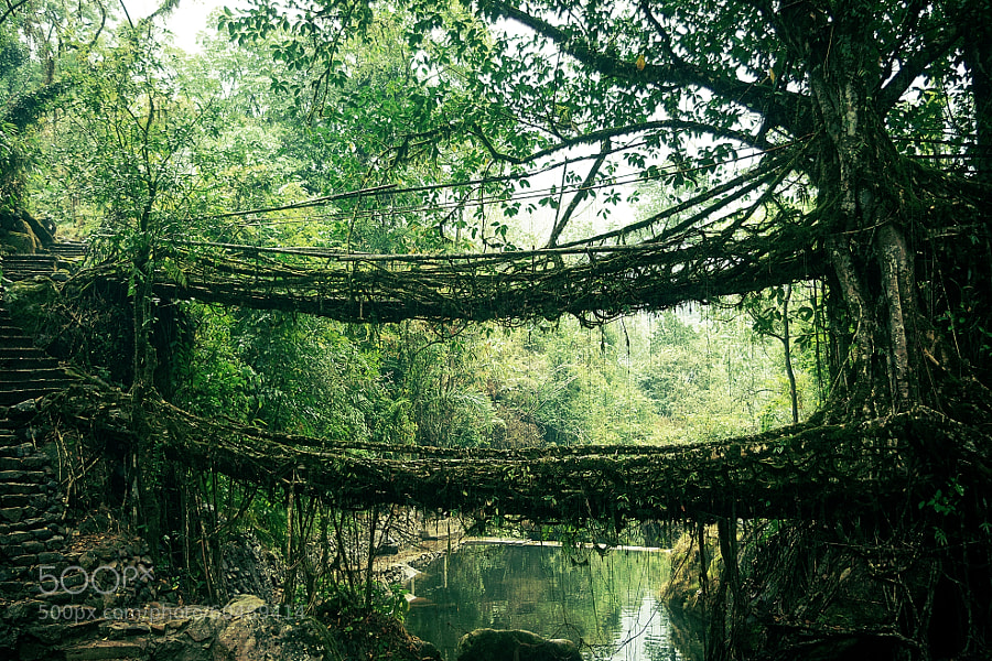 Photograph Double decker root bridge by Andy Holt on 500px