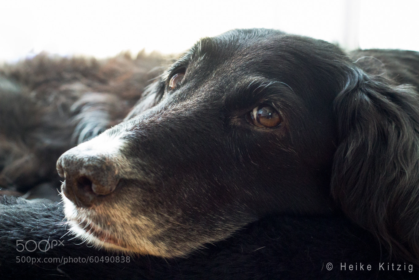 Photograph Pelin tired dog by Heike Kitzig on 500px