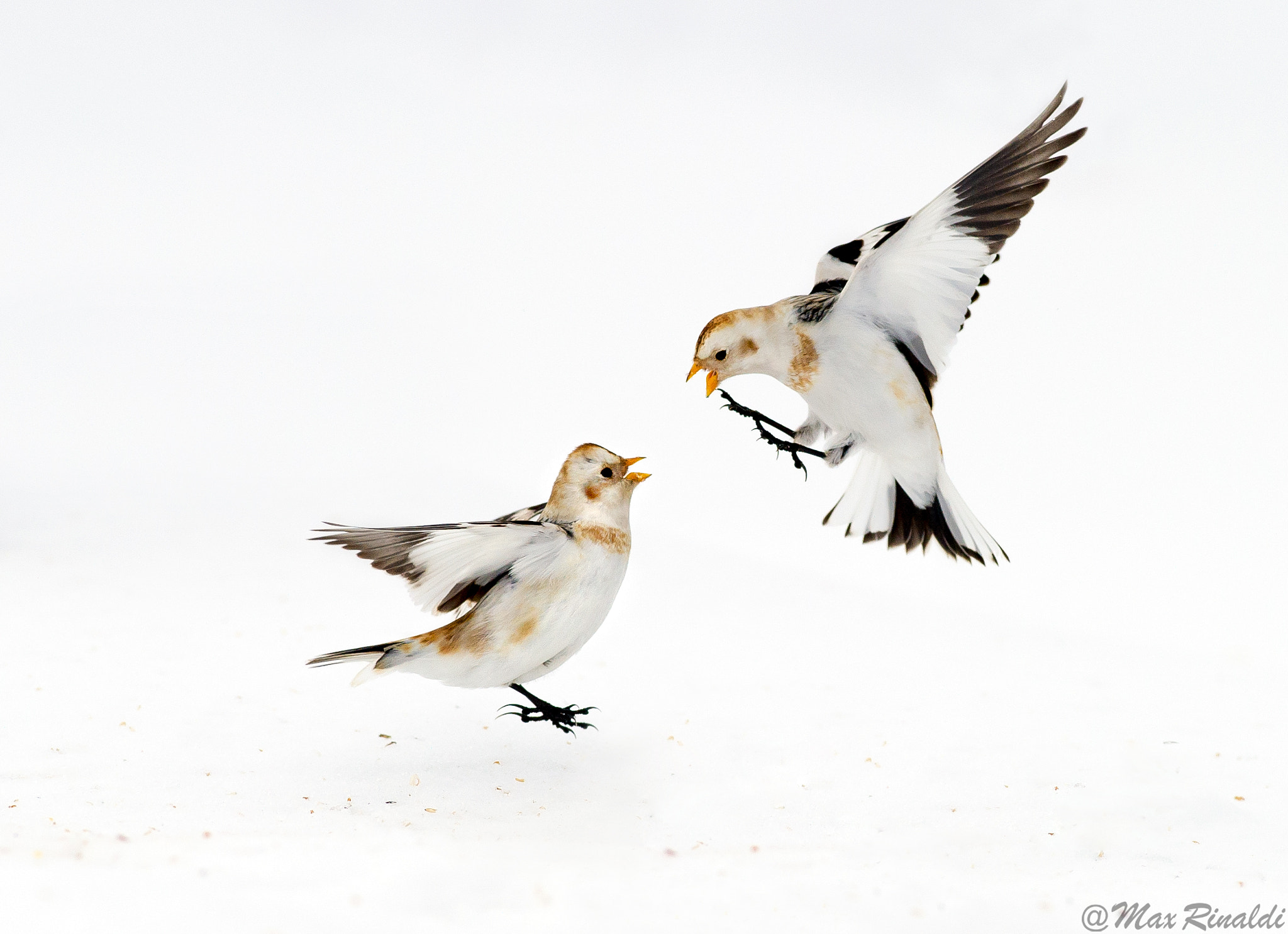 Photograph Snow Fight by Max Rinaldi on 500px