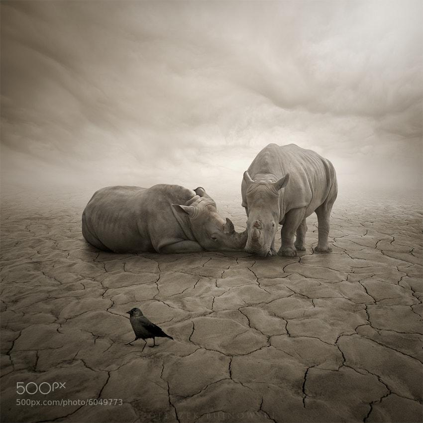 Photograph Lost in desert by Leszek Bujnowski on 500px
