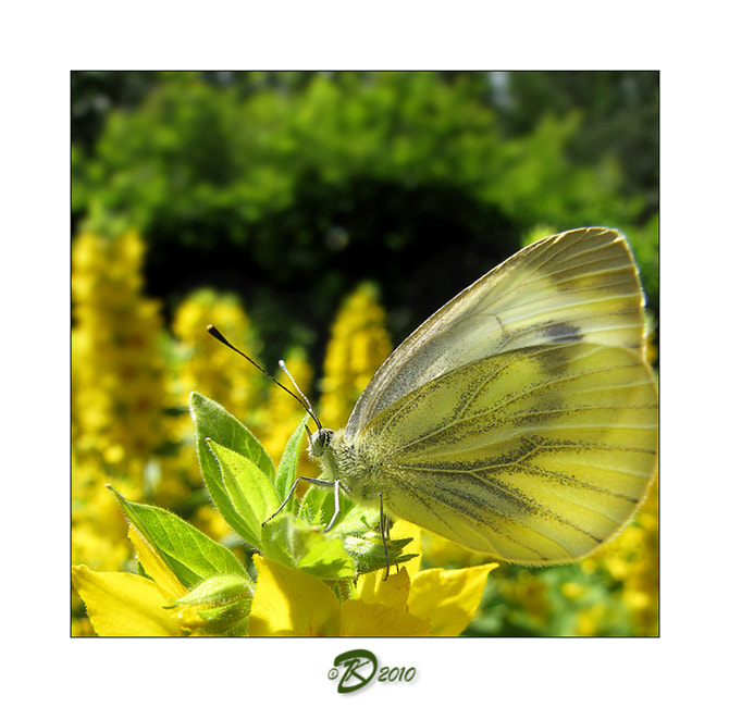 Photograph Butterflies album: 1 by no_gravity * on 500px