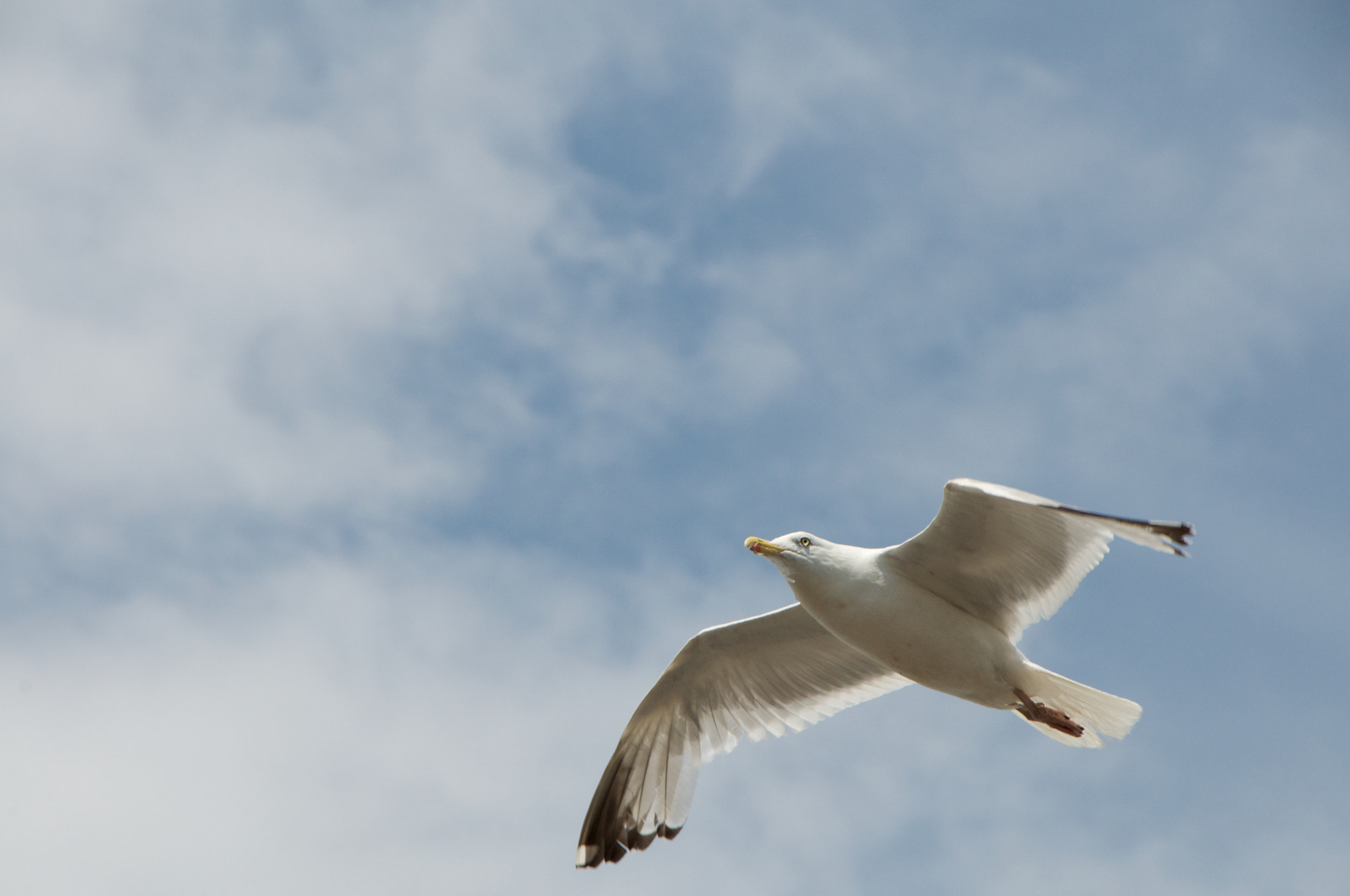 Photograph Seagull in flight by Patrick de Vries on 500px