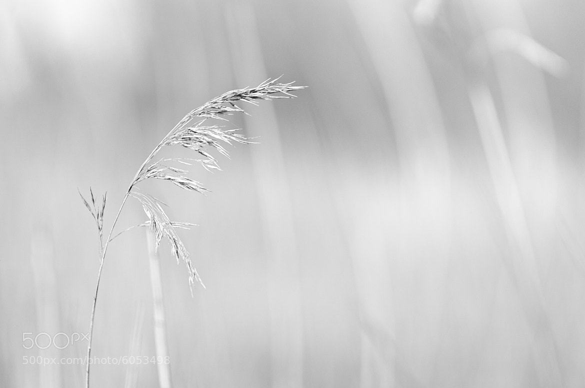 Photograph In The Wind by Martijn Akse on 500px