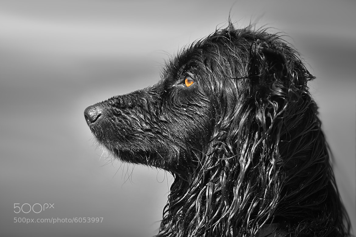 Photograph paint in black by Mathias Ahrens on 500px