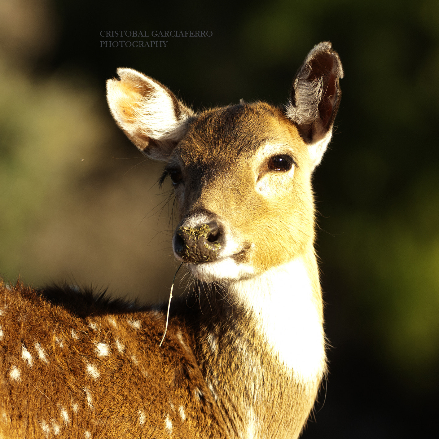 Photograph Bambi by Cristobal Garciaferro Rubio on 500px