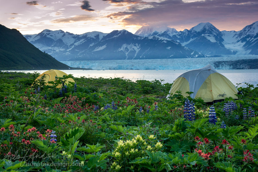 Camping in Russell Fjord by A. Andis on 500px.com