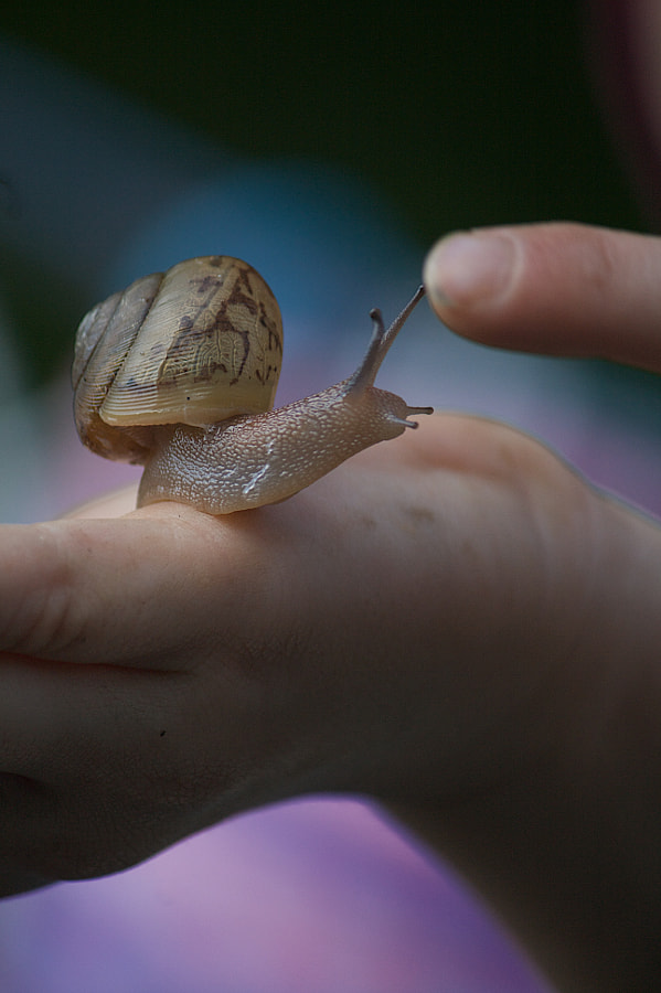 Photograph Snail High-five by Dawn Renee O'Neal-Shumate on 500px