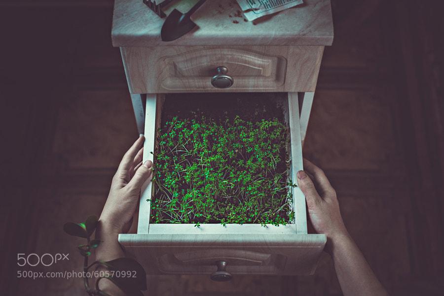 Photograph Avoir la main verte (Green fingers) by Dina Belenko on 500px