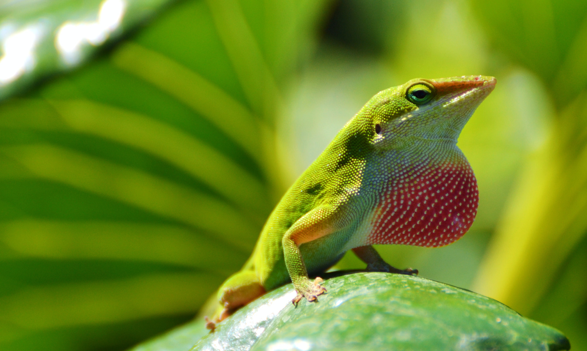 Photograph Green Anole (with Polka Dots) by Michael Fitzsimmons on 500px