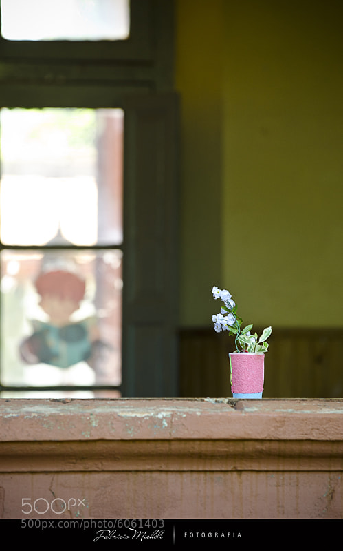 Photograph The pot in the window by Fabricio Micheli on 500px