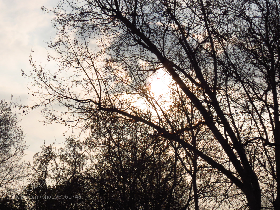 Photograph Through the branches by Federica Galli on 500px