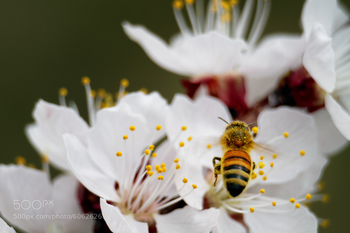 Photograph bee your self by Scott Stringham on 500px