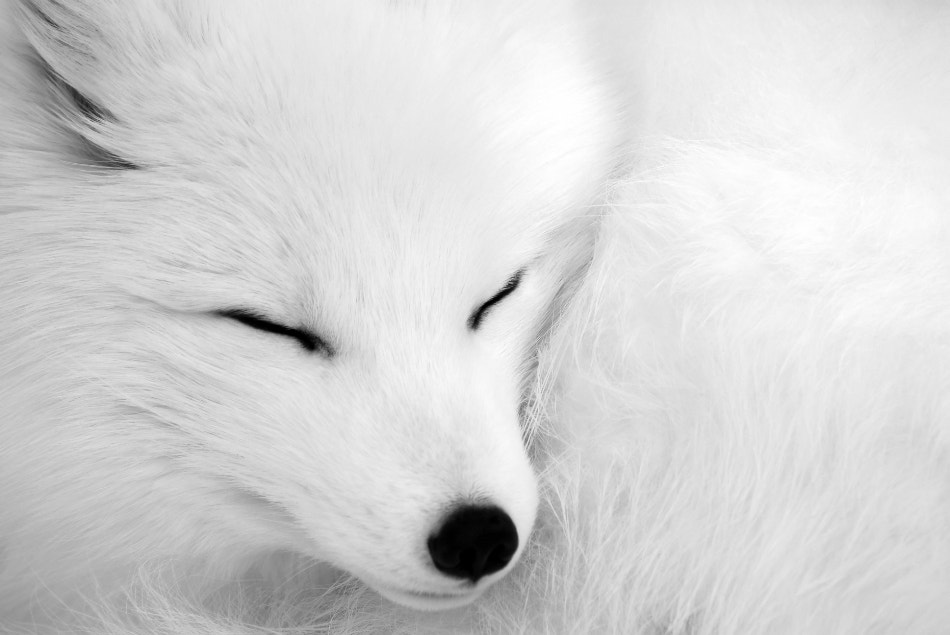 Photograph asleep by Alain Turgeon on 500px