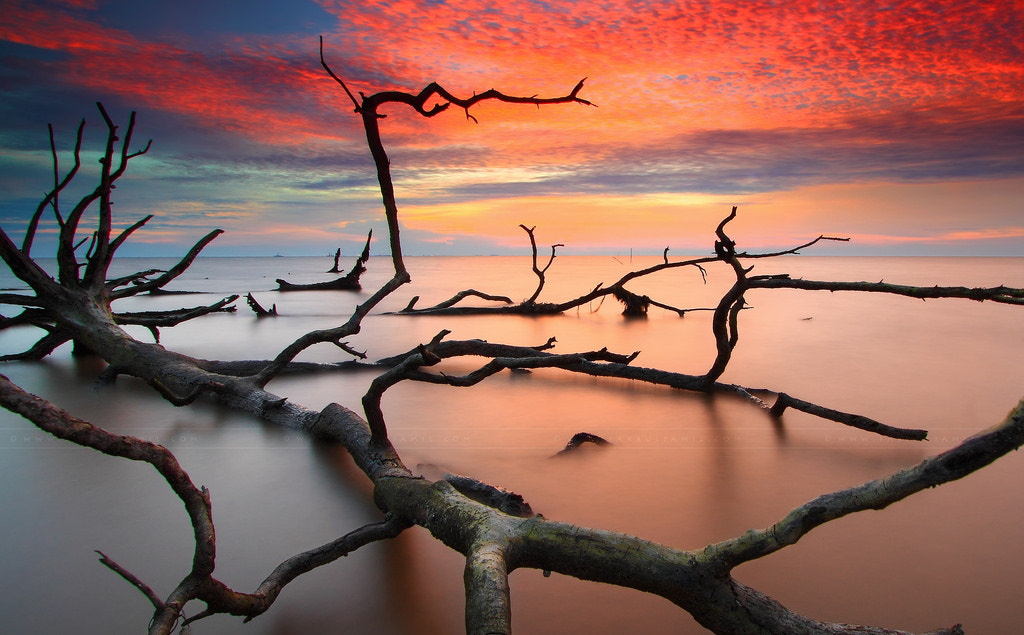 Photograph The Undead Trees by Fakrul Jamil on 500px