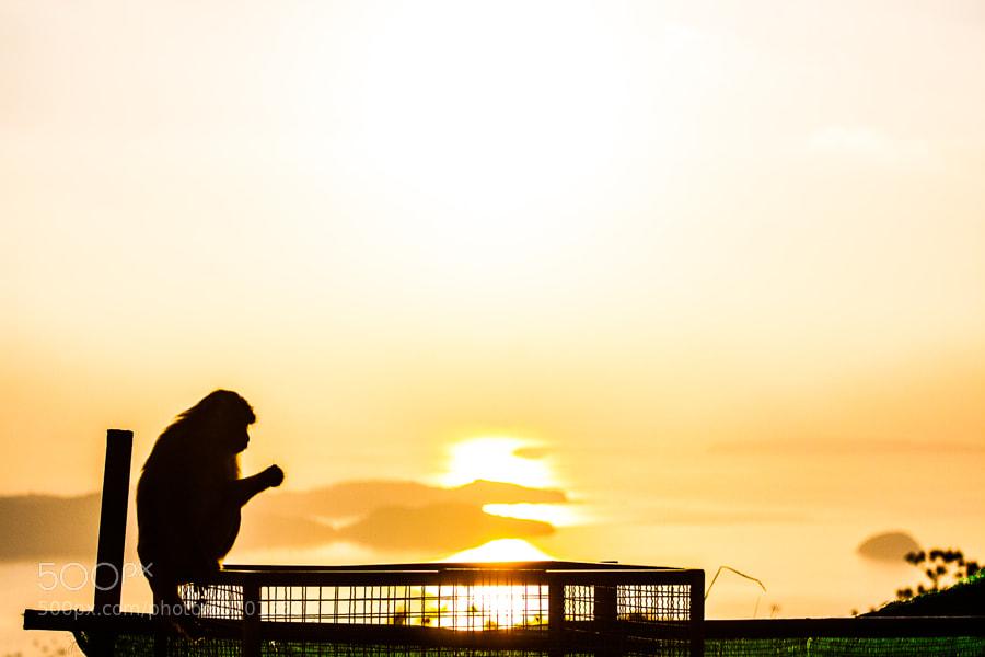 Monkey silhouette in rising sun light by Gordey Doronin on 500px.com