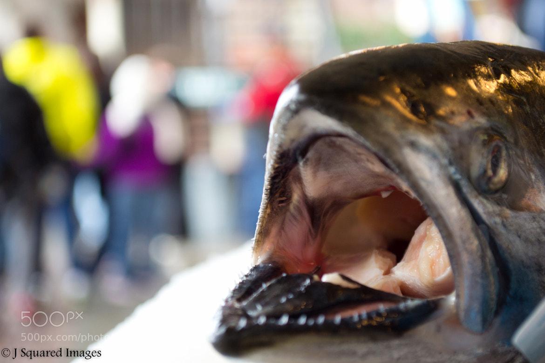 Photograph The Salmon's Last Breath by Jason Johnson on 500px