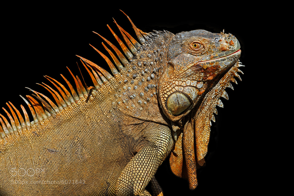 Photograph Year of the Dragon by Paul Garrett on 500px