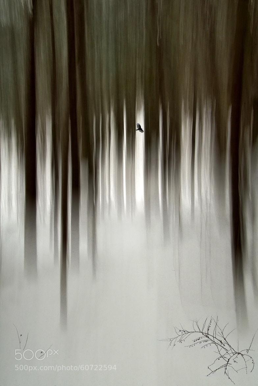 Photograph daydream envision by Andrzej Pradzynski on 500px