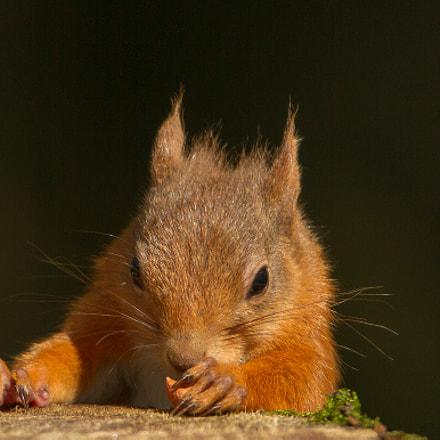 The Last Nut !