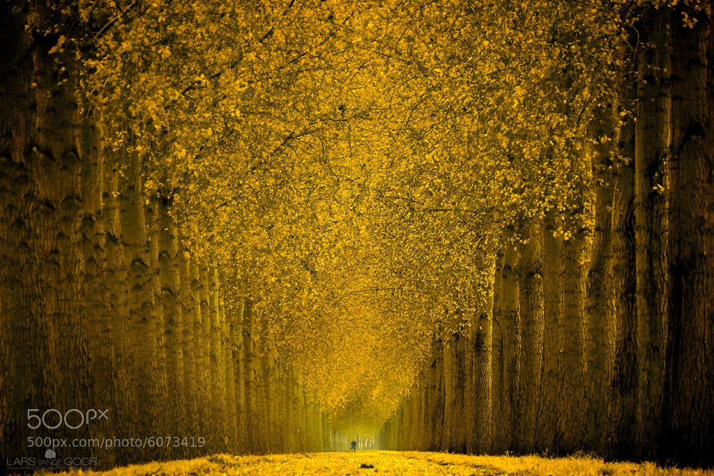 Photograph Cycle in Gold scnd by Lars van de Goor on 500px