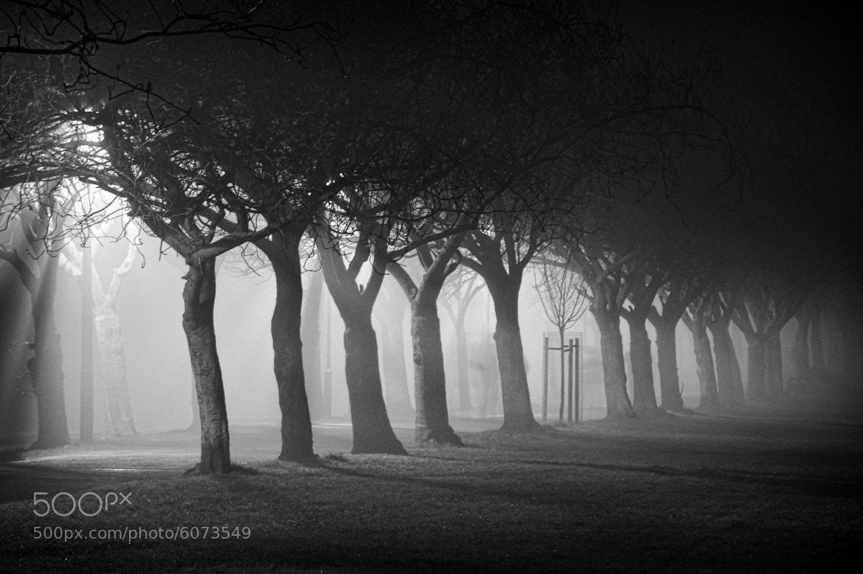 Photograph Meadows in the Mist by Zain Kapasi on 500px