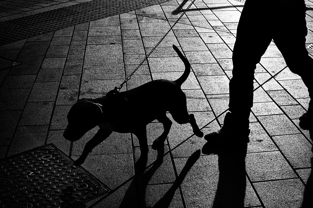 Photograph walking the dog by David Mar Quinto on 500px