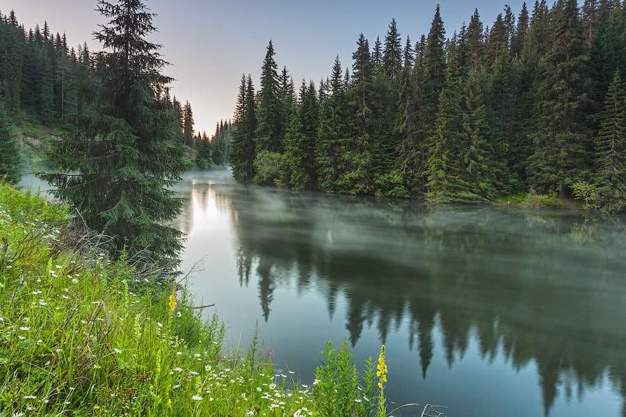 Photograph Greenness by Evgeni Dinev on 500px