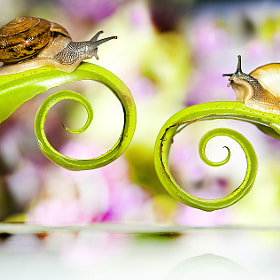 ***...Snail Destiny...*** by Thanit Koolkoksoong (Koolkoksoong) on 500px.com