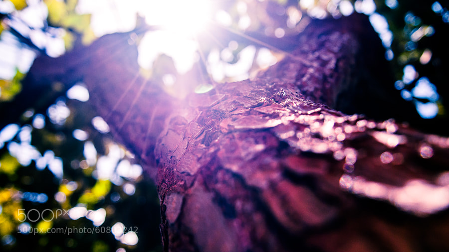 Photograph All bark and some glitter. by Daniel Poon on 500px