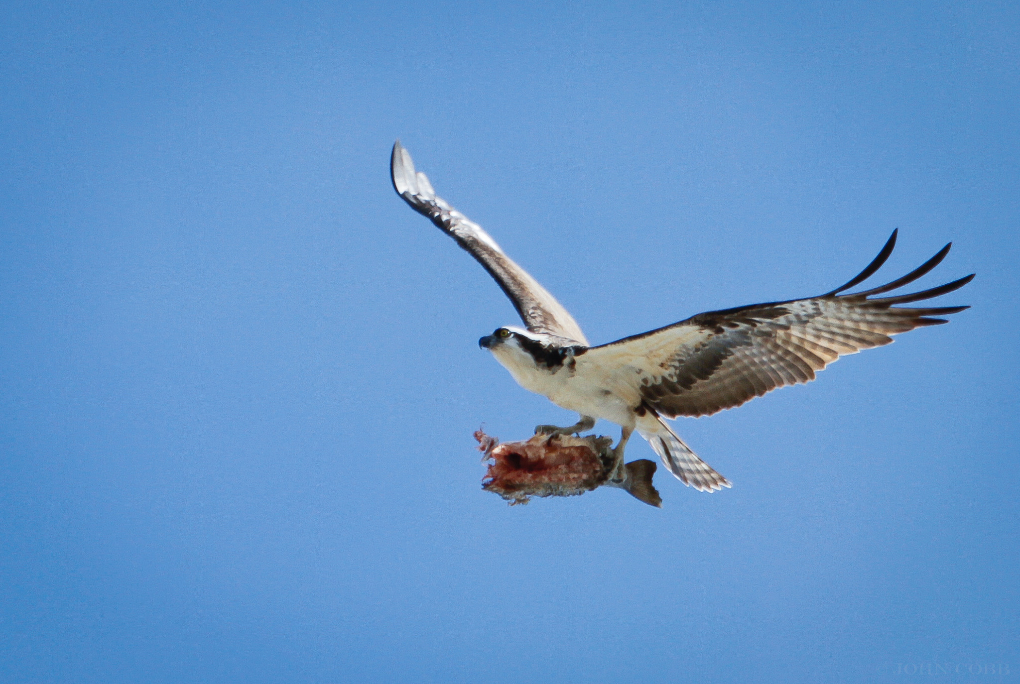 Photograph Lunch on the Fly by John Cobb on 500px