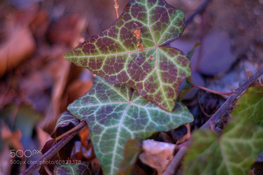 "Cute leaf by Selim Özköse on 500px.com"" border=""0"" style=""margin: 0 0 5px 0;"