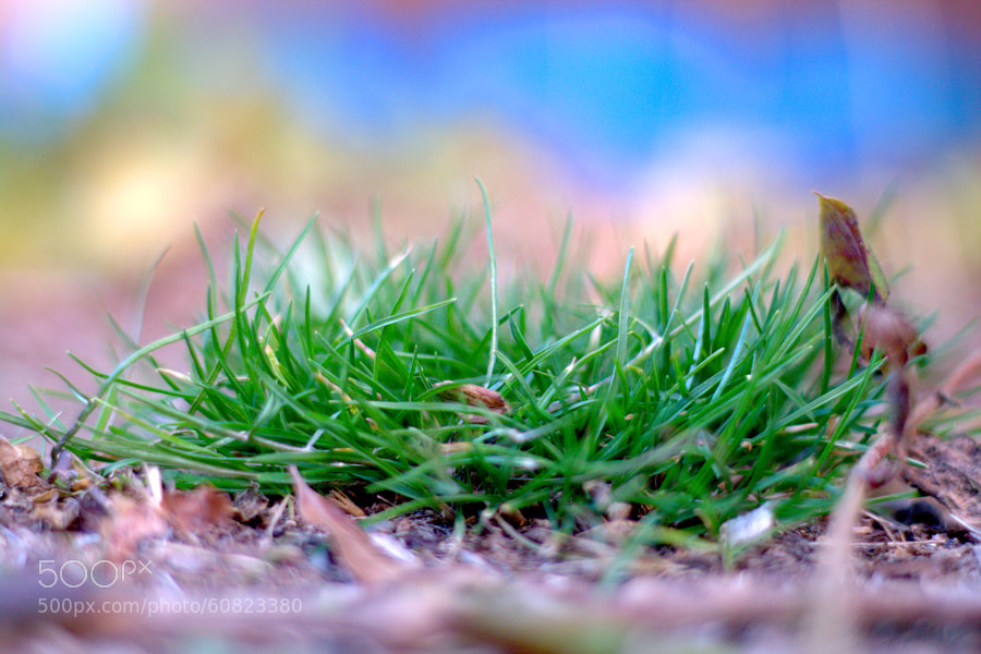 "grass by Selim Özköse on 500px.com"" border=""0"" style=""margin: 0 0 5px 0;"