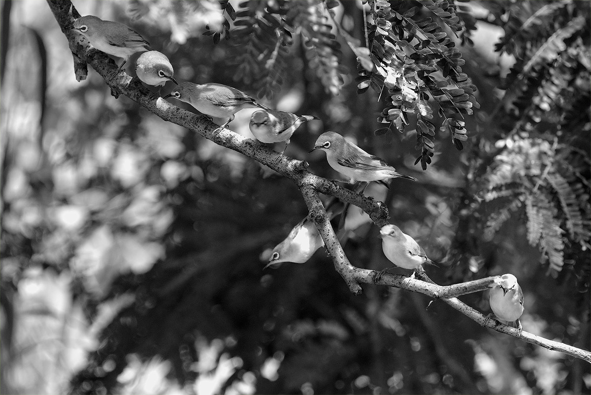 Photograph Bird's Party by Pongsatorn P on 500px