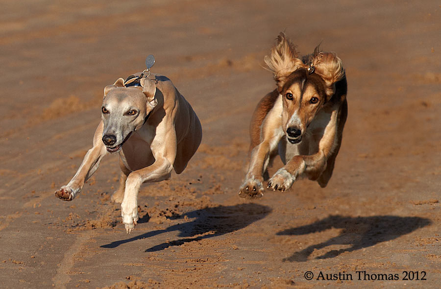 Photograph Neck and Neck by Austin Thomas on 500px