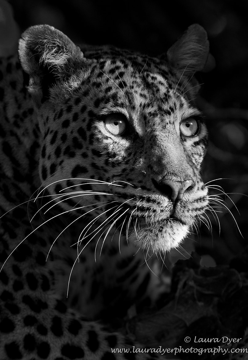 Photograph Cats eyes by Laura Dyer on 500px