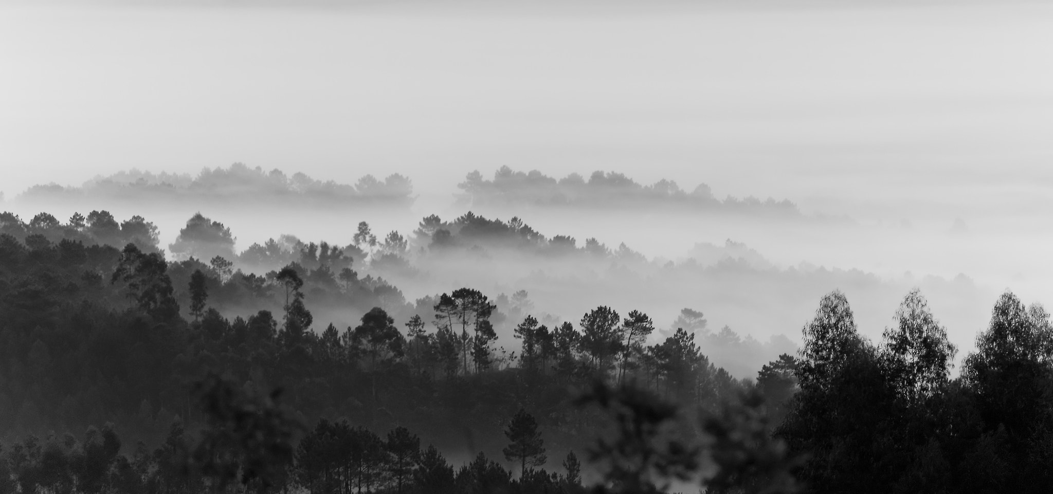 Photograph Soft morning ... by Miguel Silva on 500px