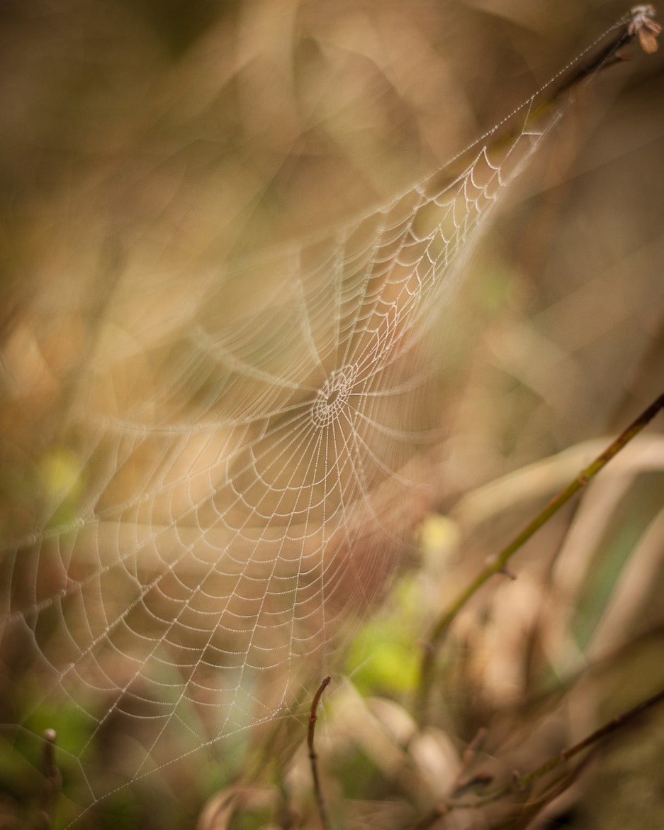 Photograph Delicate Web by Sean Cooper on 500px