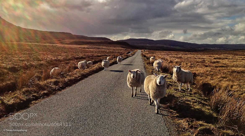 Photograph Baa-ram-ewe by Tanaa Kosiyabong on 500px