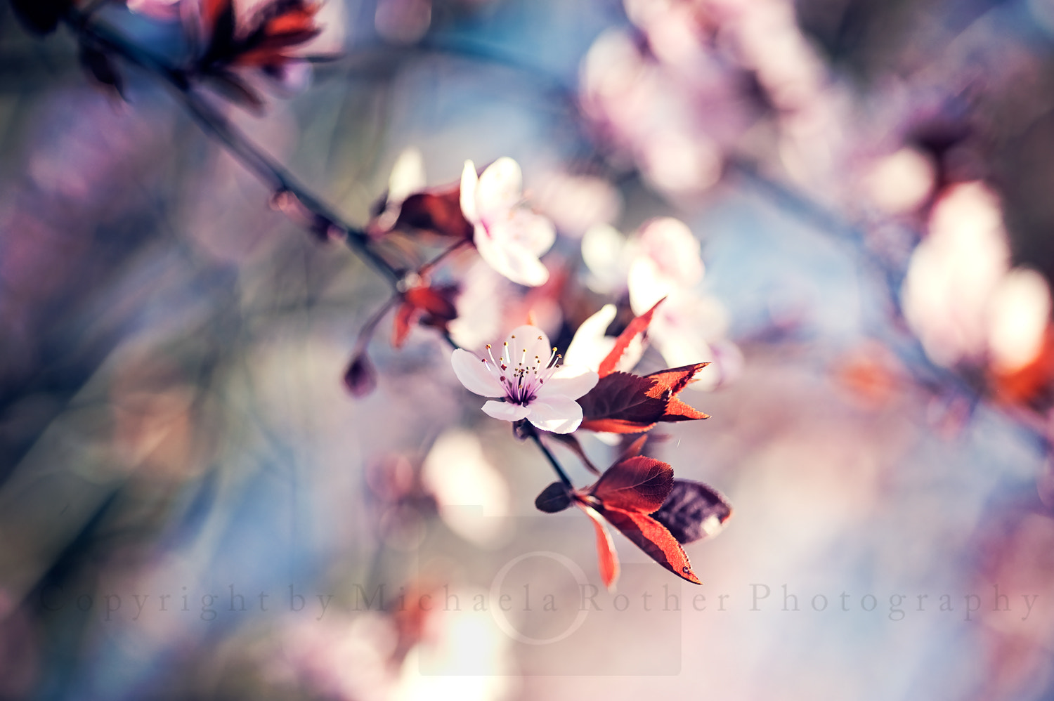Photograph {L*O*V*E} by Michaela Rother on 500px