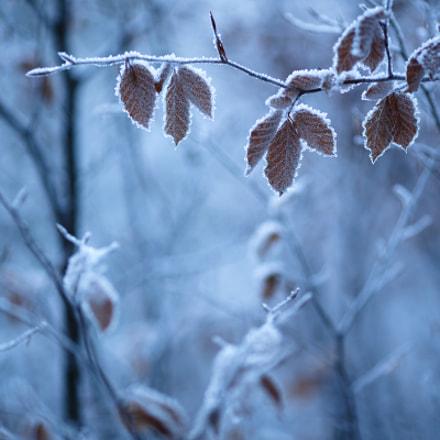 frozen harmonies
