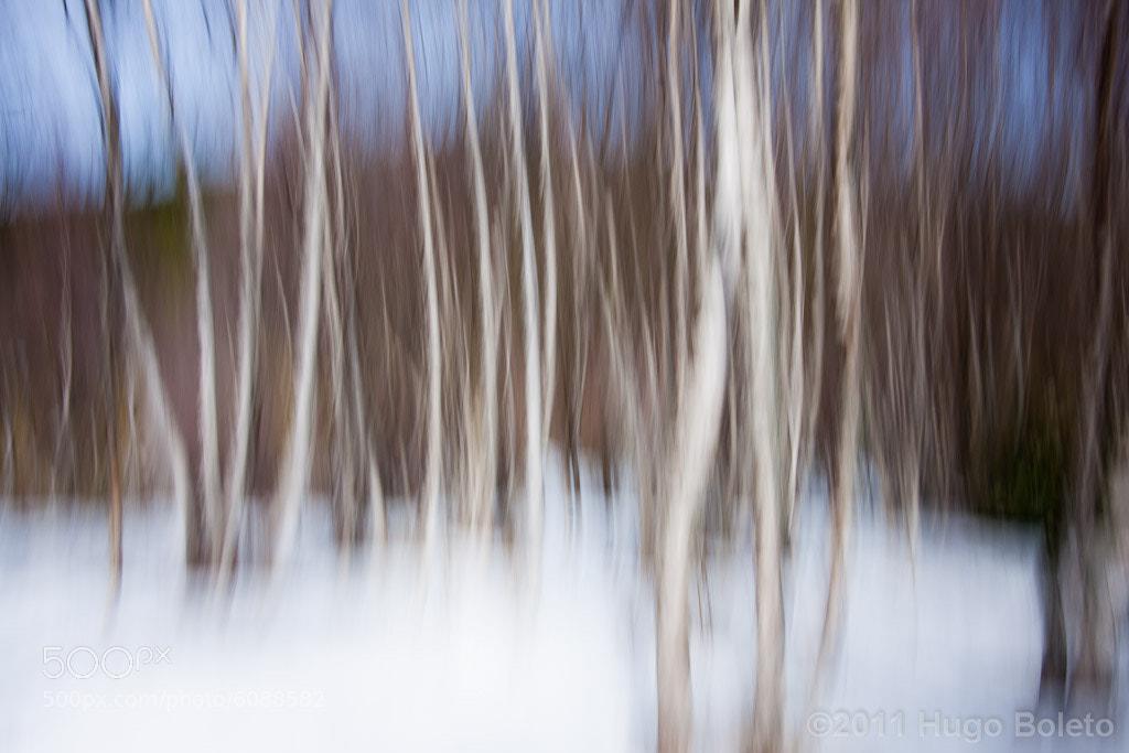 Photograph Birch Painting by Hugo Boleto on 500px
