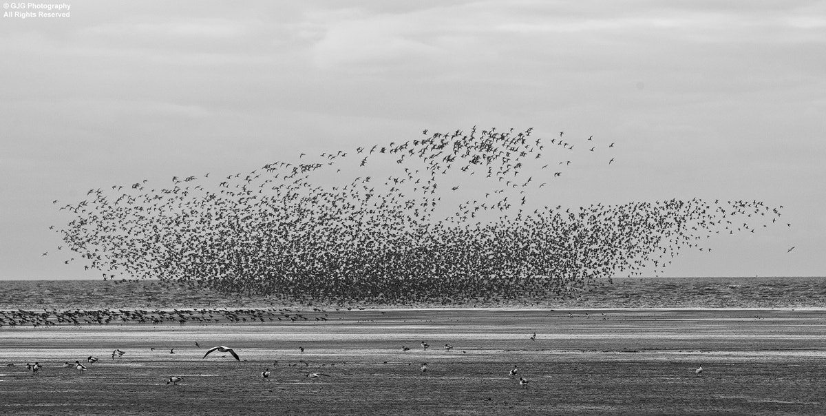 Photograph Take Off by Graham Goddard on 500px