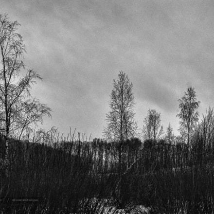 Despair - Яхрома