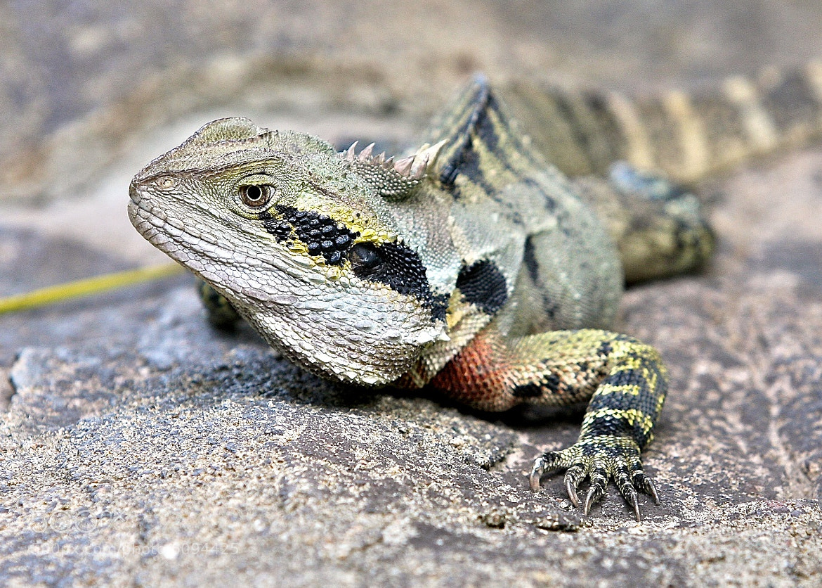 Photograph Male Dragon by Harsh Brown on 500px